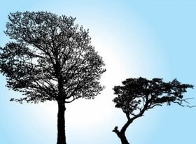 Tree Silhouette vectors material