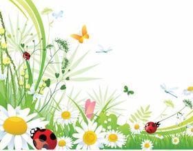 Butterfly background shiny vector
