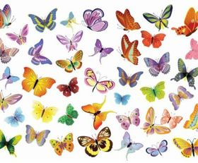 Butterflies Decoration vector