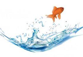 goldfish 5 vector