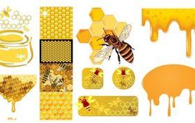 bee honey honeycomb creative vector