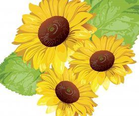 Sunflower set vector