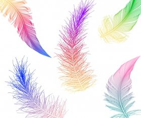 Colorful feather Free vector design