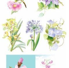 elegant watercolor flowers vector