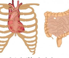 Internal organs icons flat vector