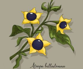Belladonna flower colored classical vector