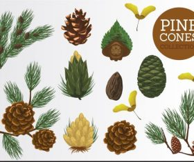 Pine elements leaf seed flower vector