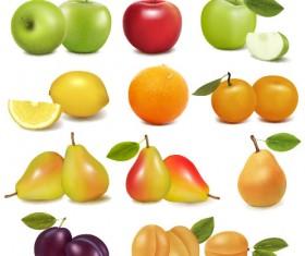 Delicious Fruit 02 vector