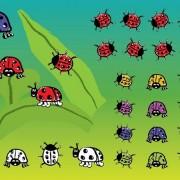 Ladybugs vector