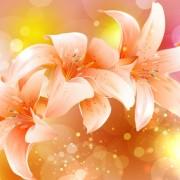 Link toBrilliant petal background vector 05