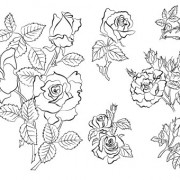 Link toHand draw flower vector 03