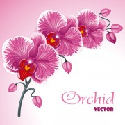 Link toSet exquisite with flowers background free vector 02