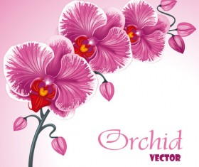 Set Exquisite with Flowers background free vector 02