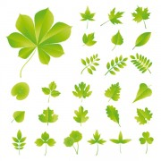 Link toSet of exquisite leaves vector graphics part 03
