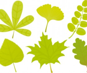 Set of Exquisite Leaves vector Graphics part 04
