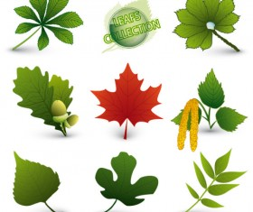 Set of Exquisite Leaves vector Graphics part 05