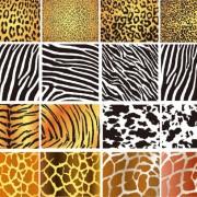 Link toSet of leopard pattern vector 01