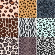 Link toSet of leopard pattern vector 03