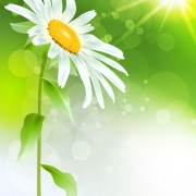 Link toBright with flowers free vector 04