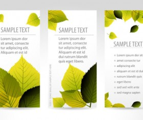 Set of maple leaves cards vector 01