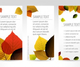 Set of maple leaves cards vector 02