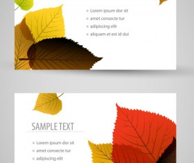 Set of maple leaves cards vector 03