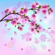 Link toJapan cherry blossoms free vector 04
