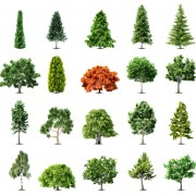 Link toElements of various trees vector 01