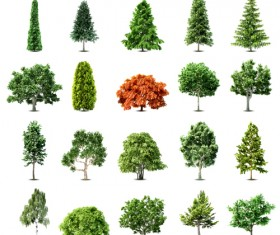 Elements of Various trees vector 01