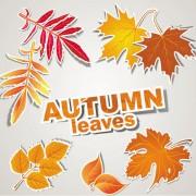Link toAutumn leaves design elements vector
