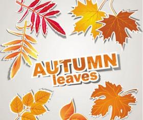 autumn leaves design elements vector