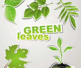 green leaves design elements vector