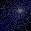 spiderweb design elements vector 02