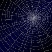 Link toSpiderweb design elements vector 02