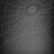 Link toSpiderweb design elements vector 04