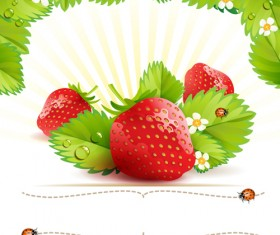 Fresh Strawberry vector 01