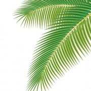 Link toSet of green palm leaves vector 01