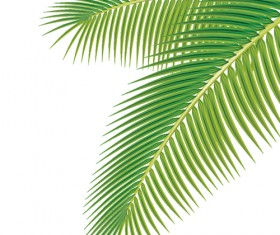 Set of green Palm leaves vector 01
