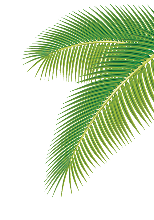 Palm Leaf Template http://freedesignfile.com/7418-set-of-green-palm-leaves-vector-01/