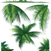 Link toSet of green palm leaves vector 03