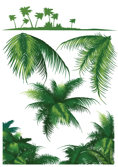 Palm Leaf Pattern Vector Set of green palm leaves