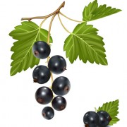 Link toSet of fresh berries vector 01