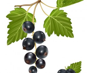 Set of Fresh Berries vector 01