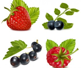 Set of Fresh Berries vector 02