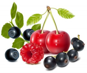 Set of Fresh Berries vector 03