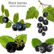 Link toSet of fresh berries vector 04