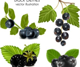 Set of Fresh Berries vector 04