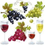 Link toGrapes and grape wine elements vector 01