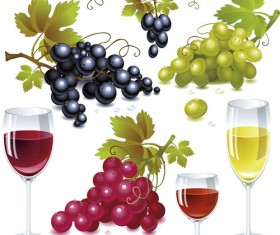 Grapes and grape wine elements vector 01