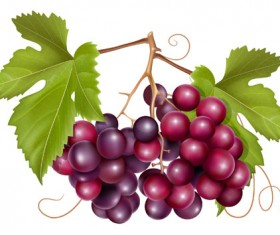 Grapes and grape wine elements vector 02
